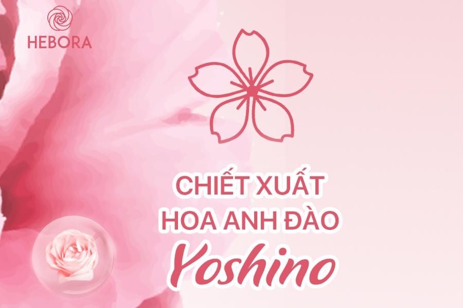 Chiết xuất hoa anh đào Yoshino trong viên uống Hebora