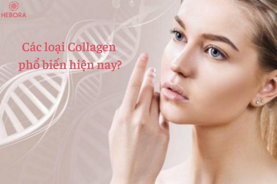 Các loại Collagen phổ biến trên thị trường