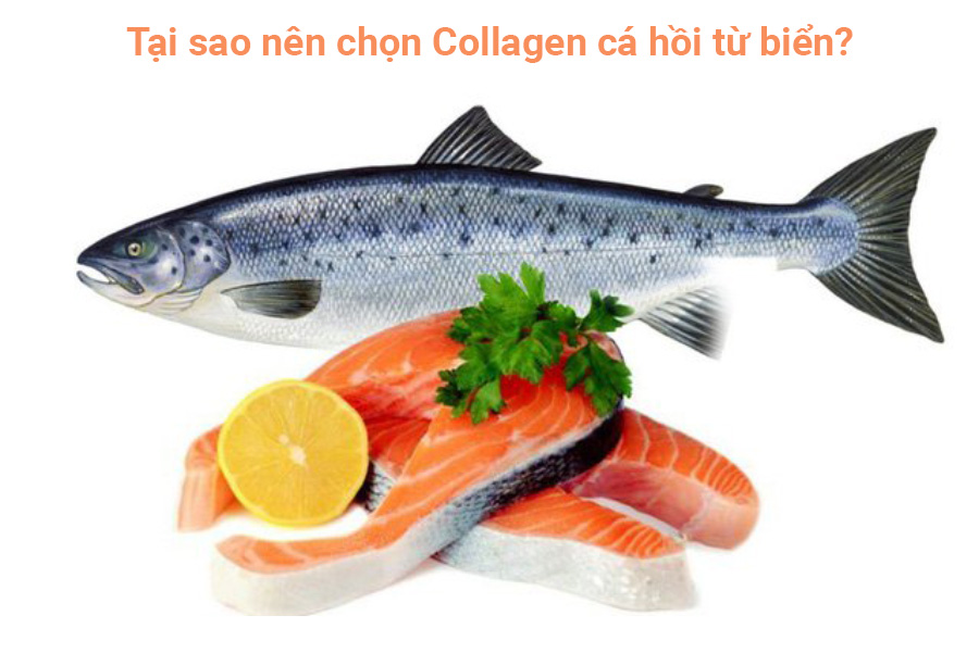 Tại sao nên chọn Collagen cá hồi từ biển?