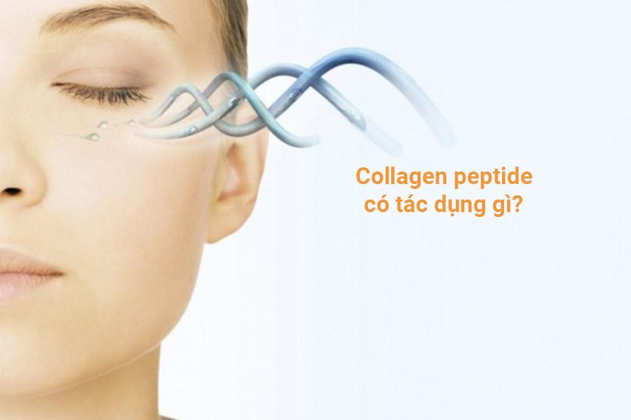 Collagen peptide có tác dụng gì?