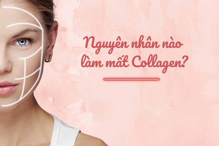 Nguyên nhân làm suy giảm Collagen