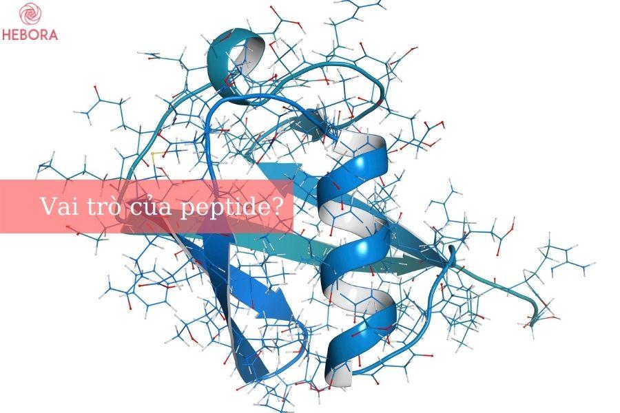 Vai trò của các loại peptide
